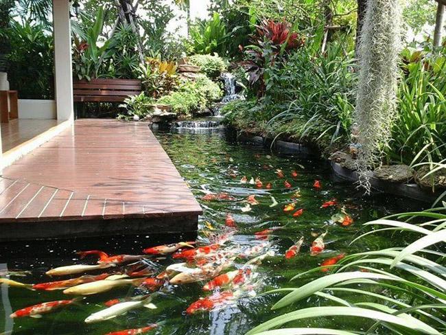 Khi thiết kế hồ cá Koi trong sân vườn nên chú ý đến vị trí phong thủy phù hợp.Hồ cá Koi không nên để ở vị trí gần sát với căn nhà, vì nếu như vậy sinh khí trong nhà sẽ bị cuốn hút mạnh và nhanh hơn khi xây ở xa nhà.