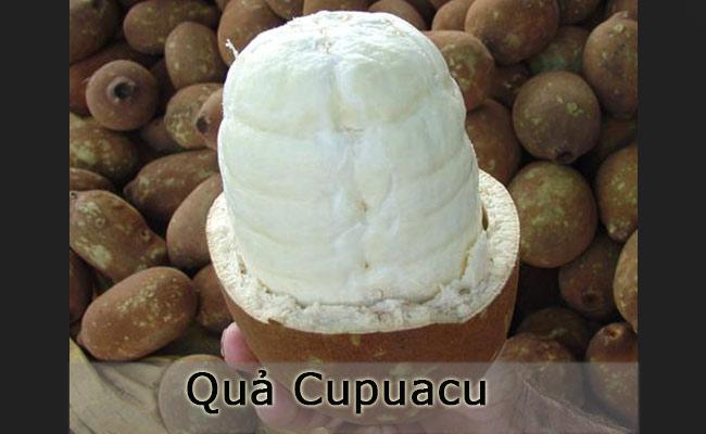 Cupuacu chủ yếu chỉ sống được trong rừng nhiệt đới Amazon và một số vùng ở Peru. Cupuacu có vỏ dày và ruột bên trong mềm như bột. Ruột quả Cupuacu rất thơm, vị lại gần giống như chocolate và rất giàu vitamin B cũng nhưthúc đẩy hệ miễn dịch.