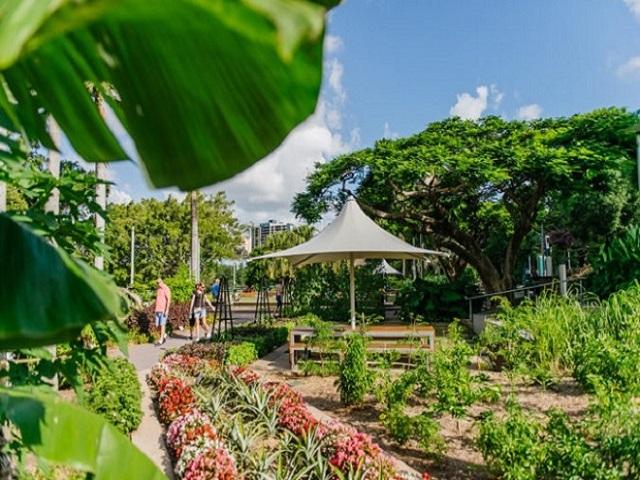 Lạ lùng công viên rau ăn được ở Úc khiến người dân ngày nào cũng muốn đến