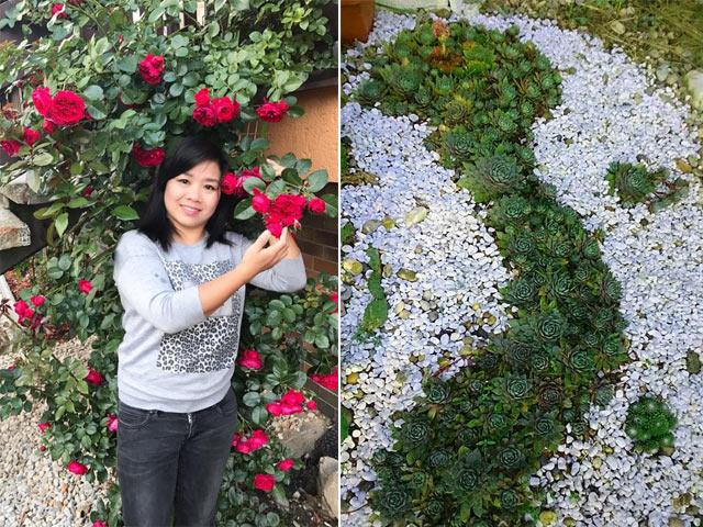Mẹ Việt trồng sen đá hình bản đồ Việt Nam, sao vàng 5 cánh đẹp nao lòng ở trời Tây