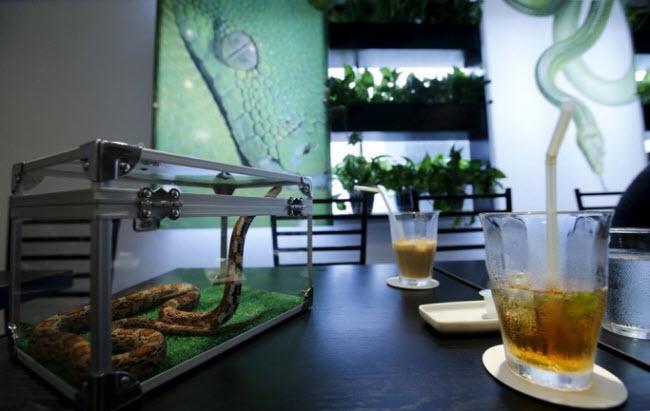 Quán cà phê Tokyo Snake Center khai trương vào tháng 8.2015 tại khuphố thời trang Harajuku ở Tokyo, Nhật Bản.