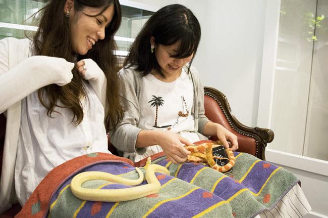 Loài rắn có màu sắc nổi bật nhất là loài rắn chuột Trans-Pecos, trăn thảm, rắn ngô và trăn cầu vồng Brazil.