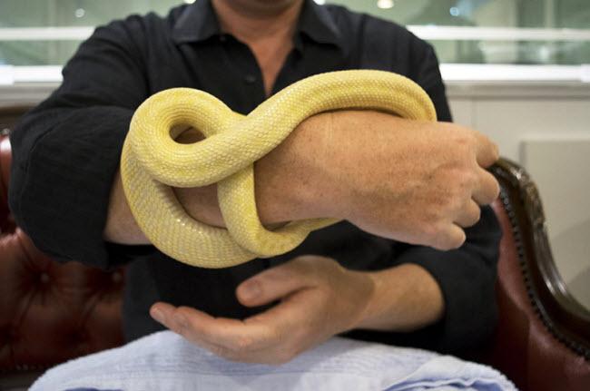 Khách hàng thích thú chơi đùa với rắn tại quán Tokyo Snake Center.