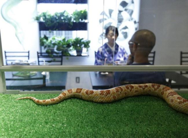 Nội thất trong quán Tokyo Snake Center rất sang trọng với tường trắng và những bức tranh ấn tượng cùng túi và phụ kiện da rắn đắt tiền.