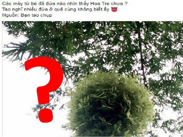 Câu hỏi gây tranh cãi nhất MXH hôm qua: Đã ai nhìn thấy hoa tre chưa?