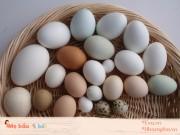 Bà bầu ăn trứng gì để tốt nhất cho thai nhi trong bụng?