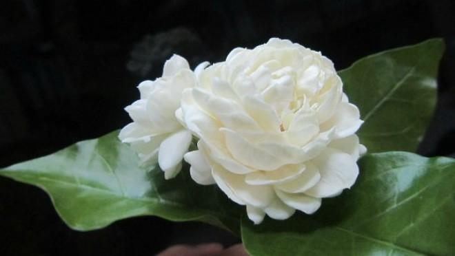 trong chau hoa nhai bay nha, vua dep vua toa ngat huong thom - 6