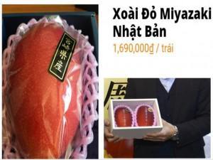 Xem cận cảnh quả xoài đỏ Nhật Bản 1,7 triệu mỗi trái đang 'cháy hàng' ở Việt Nam