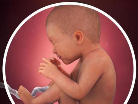 Thai nhi 35 tuần tuổi: Bé bớt nhào lộn