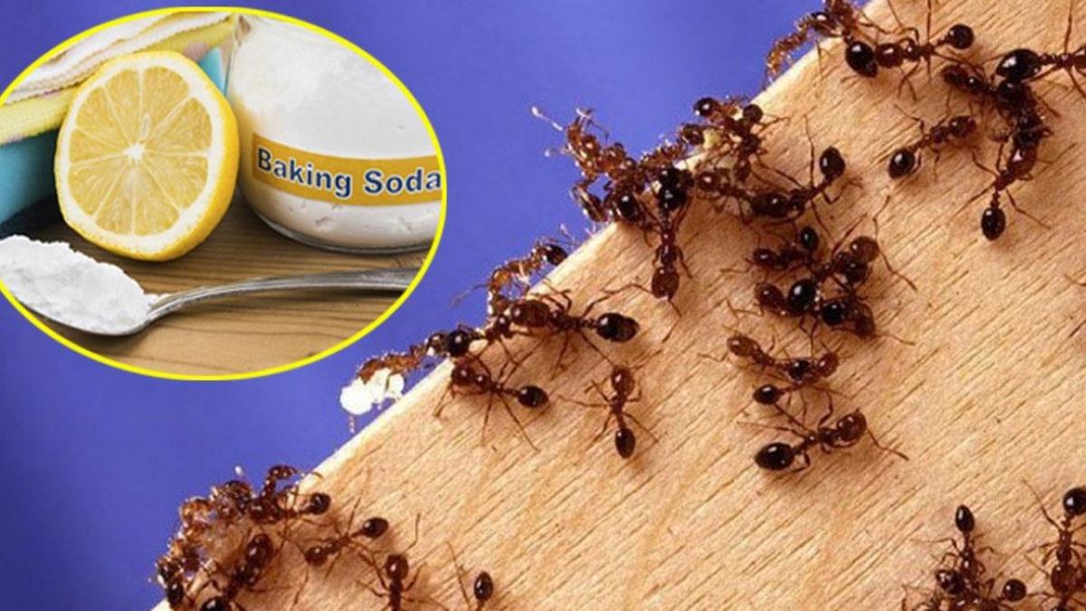 Kết quả hình ảnh cho tổ kiến trong nhà