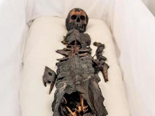 Phát hiện xác ướp hai đầu: một đầu người, một đầu cá sấu và câu chuyện bí ẩn phía sau