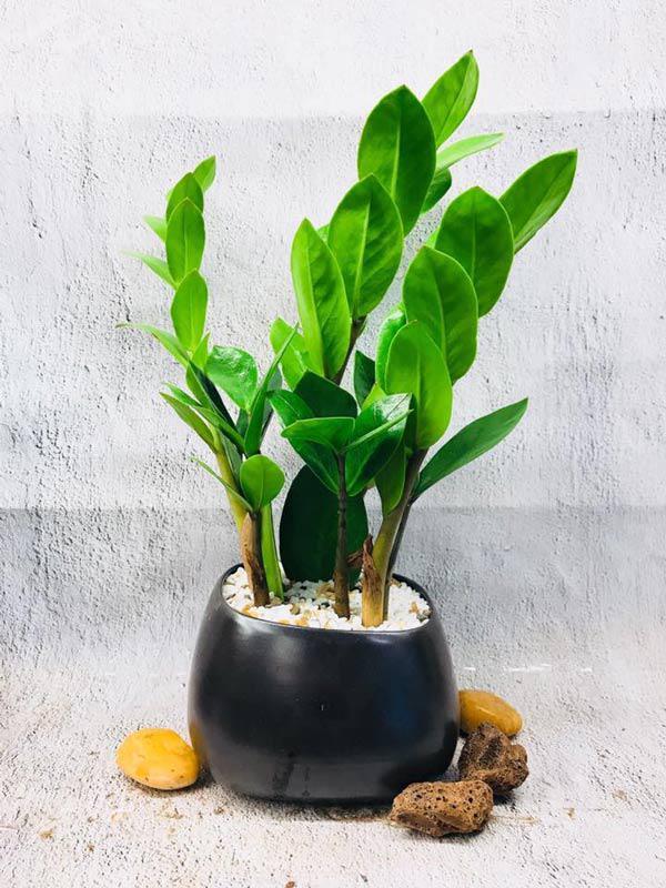 Cây trồng trong nhà theo Phong Thủy