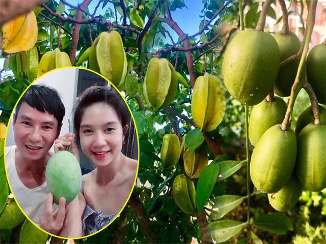 Vợ chồng Lý Hải Minh Hà khoe vườn cây trái sai trĩu trịt, tưởng không ngon mà ngon không tưởng