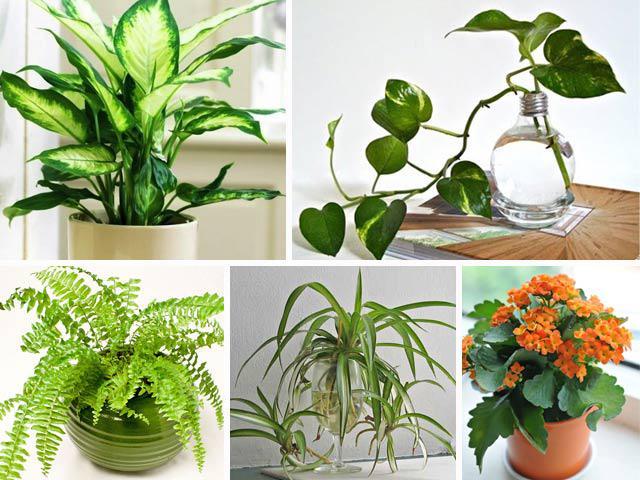 Làm đẹp nhà, sạch không khí, tăng thêm tài lộc nhờ 12 loại cây cảnh trong nhà