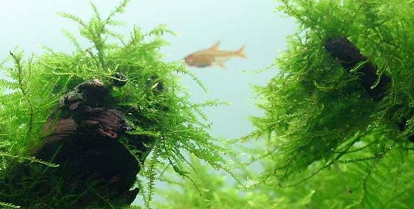 Nhà thêm sang, hết sạch khí độc nhờ những loại cây thủy sinh vừa đẹp vừa dễ chăm - 16