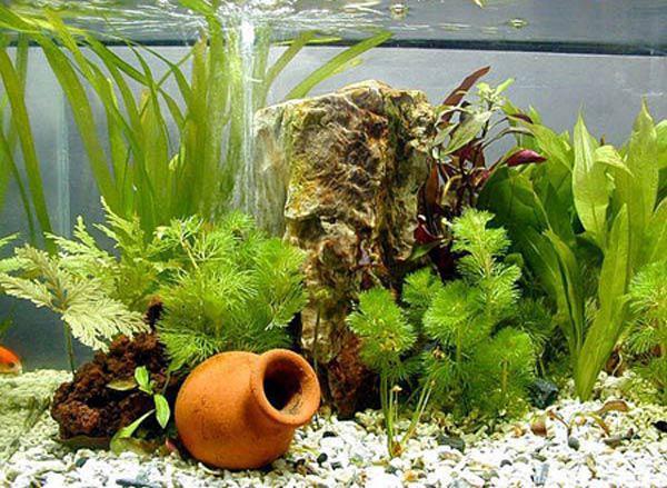 Nhà thêm sang, hết sạch khí độc nhờ những loại cây thủy sinh vừa đẹp vừa dễ chăm - 1