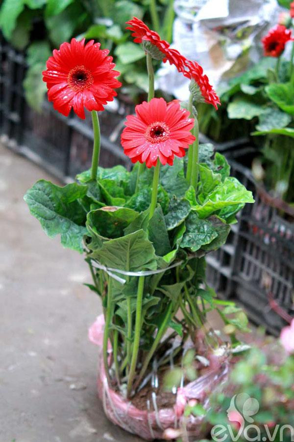 cach trong hoa dong tien don gian nhat cho hoa len ruc ro - 1