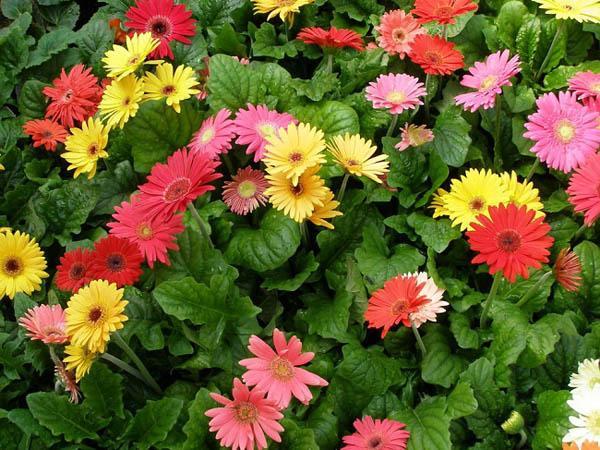 cach trong hoa dong tien don gian nhat cho hoa len ruc ro - 2