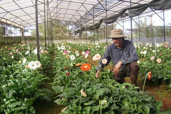 cach trong hoa dong tien don gian nhat cho hoa len ruc ro - 3