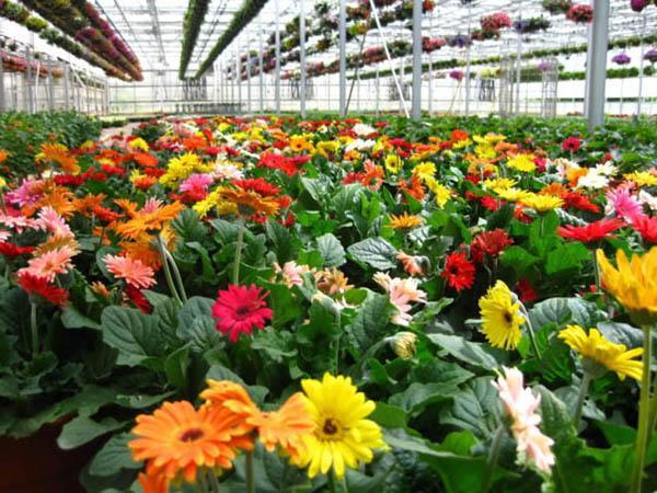 cach trong hoa dong tien don gian nhat cho hoa len ruc ro - 8