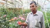 """Hơn 20 năm """"cày cuốc"""", lão nông Đà Lạt sở hữu khu vườn 8000m² với 400 loại hồng quý hiếm"""
