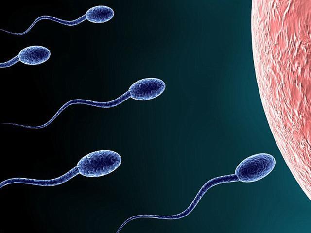 Quá trình thụ thai diễn ra như thế nào? - 5