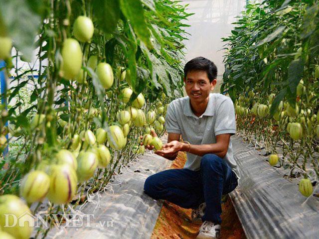 Bỏ phố lên rừng, chàng trai 8x Đà Lạt trồng được cả trang trại toàn loại quả siêu độc lạ