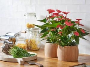 Chọn đúng loại chậu hoa nhỏ để bàn vừa làm đẹp lại tăng may mắn, tài lộc