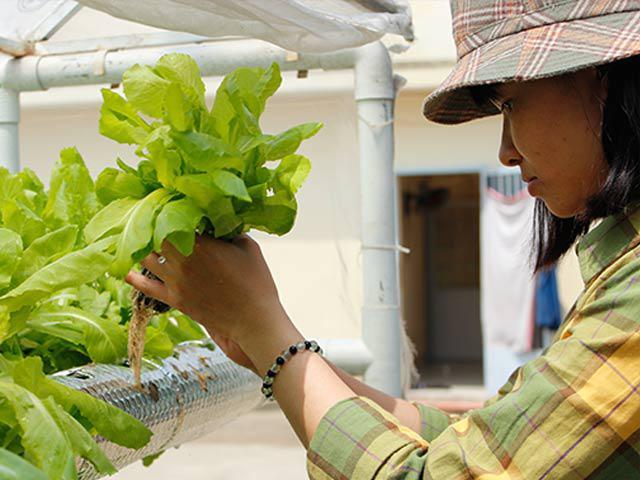 Hai cách trồng rau sạch không cần đất nhàn tênh lại sạch sẽ, tha hồ trồng sân thượng