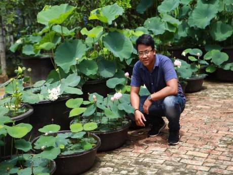 """9X xứ Quảng hé lộ tuyệt chiêu """"độc"""", chỉ trồng sen một tháng đã """"bắt"""" trổ bông rực rỡ"""