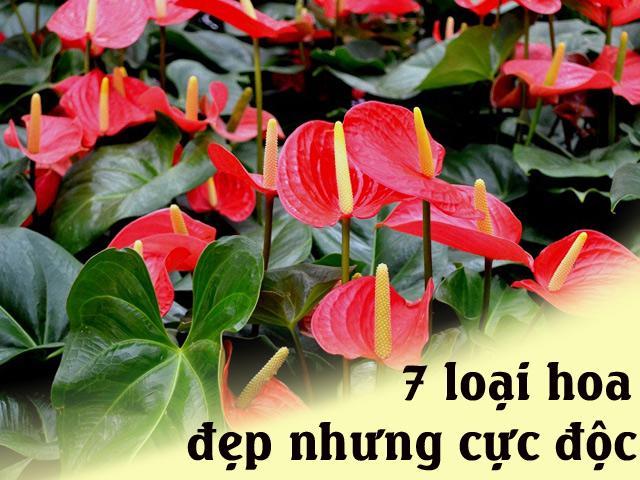 7 loại hoa quen thuộc ở Việt Nam, đẹp mê mẩn nhưng chạm vào dễ gặp ngay thần chết