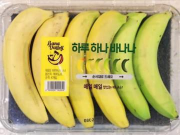 Chuối chín dần đều ở Hàn Quốc gây tranh cãi, người khen thông minh, kẻ kêu hại môi trường