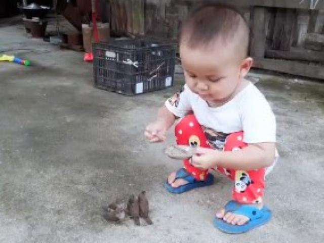Em bé má phúng phính gây sốt với màn cho chim sâu ăn cưng hết sức
