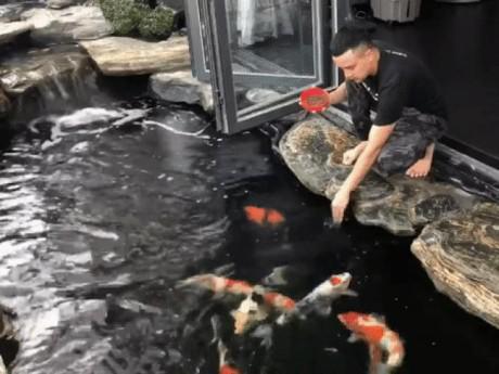 """Dùng hết 10 tấn đá, giá hàng tỷ, hồ cá Koi của Cao Thái Sơn """"khủng"""" đến thế nào?"""