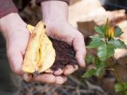 """Nhà đẹp - Tích trữ 6 loại rác trong nhà bếp rồi mang ra vườn, vài tuần sau rau sẽ lên """"vùn vụt"""""""