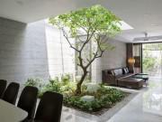"""Căn nhà Hà Nội khiến ai cũng """"thèm"""" vì chỗ nào cũng có vườn, thoáng mát quanh năm"""