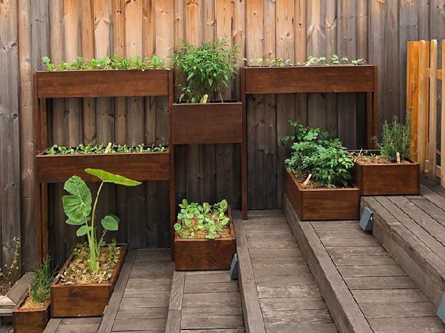 Tận mắt ngắm khu vườn rau sạch xanh mướt mát trong thùng gỗ của Tăng Thanh Hà