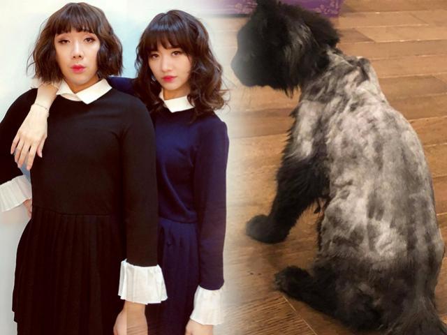 Hari Won chi tận 3000 USD để mua mèo nhưng Trấn Thành khóc thét, tố vợ ác