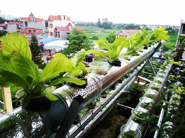 Kinh ngạc trướcnông trại trên cao của gia đình Hải Phòng: Xanh mướt quanh năm, rau củ cả tạ