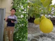 """Kinh ngạc trước""""nông trại"""" trên cao của gia đình Hải Phòng: Xanh mướt quanh năm, rau củ cả tạ"""
