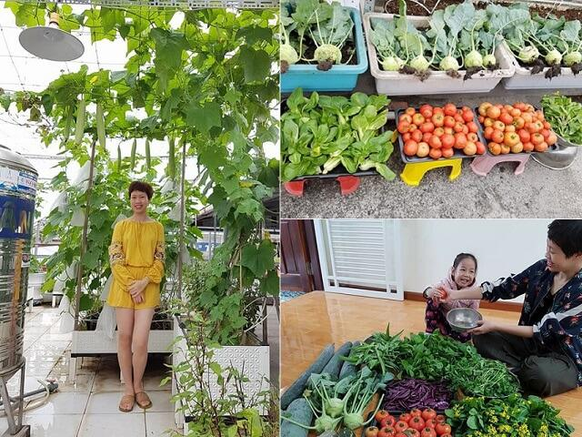 Hai Phong, 3 years of plant gardening on her / her, now is & # 39; Seeing the 60m2 farm that enjoyed everyone