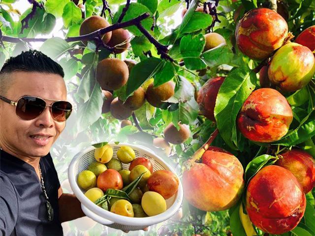 23 năm sang Mỹ, nhớ vườn Việt của nội, bố hai con trồng cả vườn cây quả sai lúc lỉu