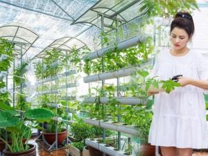 """Cùng trồng rau sân thượng nhưng nhiều sao Việt cũng phải """"nể"""" khi nhìn khu vườn nhà Vũ Thu Phương"""