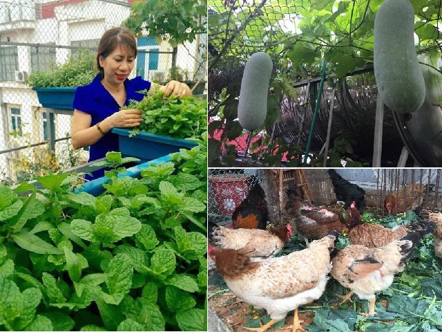Chỉ 40m² sân thượng, mẹ Hà Nội gây bất ngờ với vườn ngập rau trái, gà, trứng ăn quanh năm