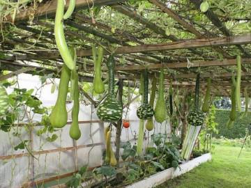 Mê hoặc trước khu vườn rau quả gì cũng có của gia đình Việt ở Séc