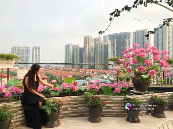 Chuyển hàng tấn đất làm ao sen, trồng hồng trên sân thượng, mẹ HN xây amp;#34;thiên đườngamp;#34; phủ kín hoa - 1