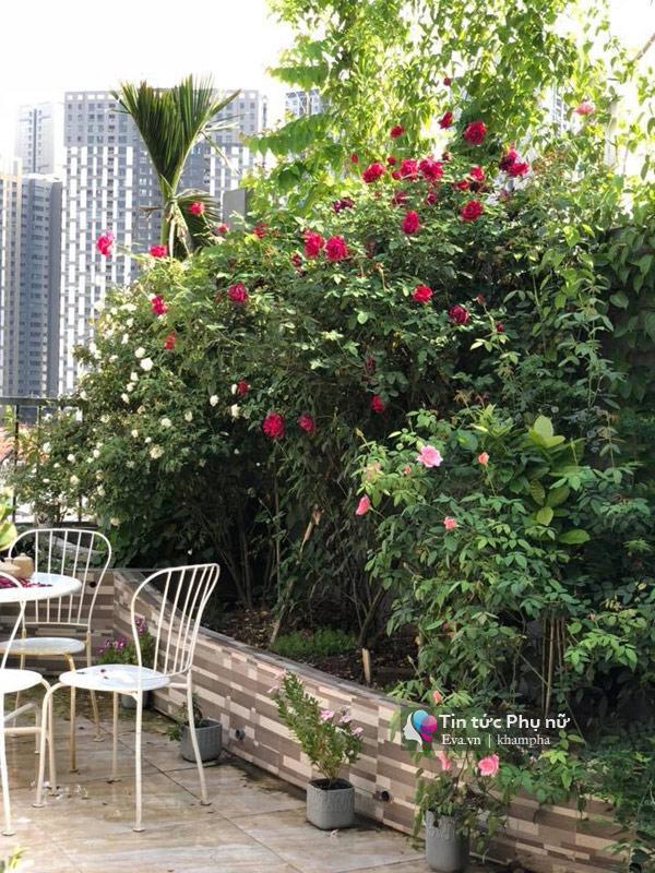 Chuyển hàng tấn đất làm ao sen, trồng hồng trên sân thượng, mẹ HN xây amp;#34;thiên đườngamp;#34; phủ kín hoa - 6