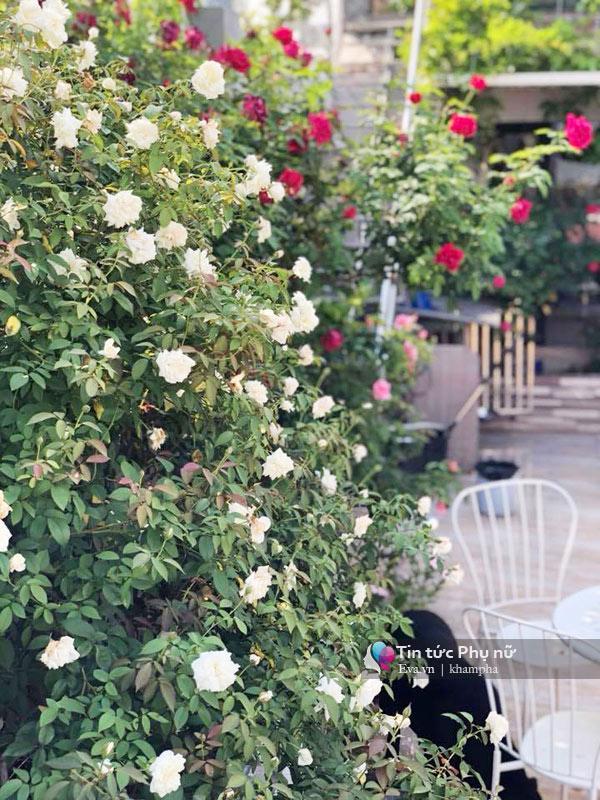 Chuyển hàng tấn đất làm ao sen, trồng hồng trên sân thượng, mẹ HN xây amp;#34;thiên đườngamp;#34; phủ kín hoa - 18