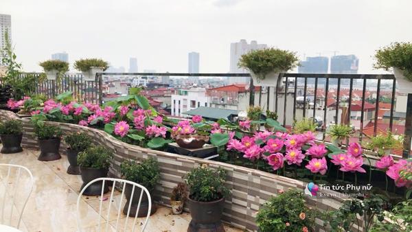 Chuyển hàng tấn đất làm ao sen, trồng hồng trên sân thượng, mẹ HN xây amp;#34;thiên đườngamp;#34; phủ kín hoa - 9