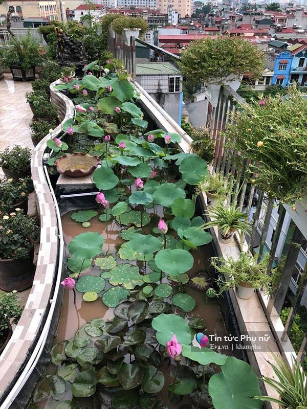 Chuyển hàng tấn đất làm ao sen, trồng hồng trên sân thượng, mẹ HN xây amp;#34;thiên đườngamp;#34; phủ kín hoa - 10